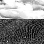 PloughLines.lowres